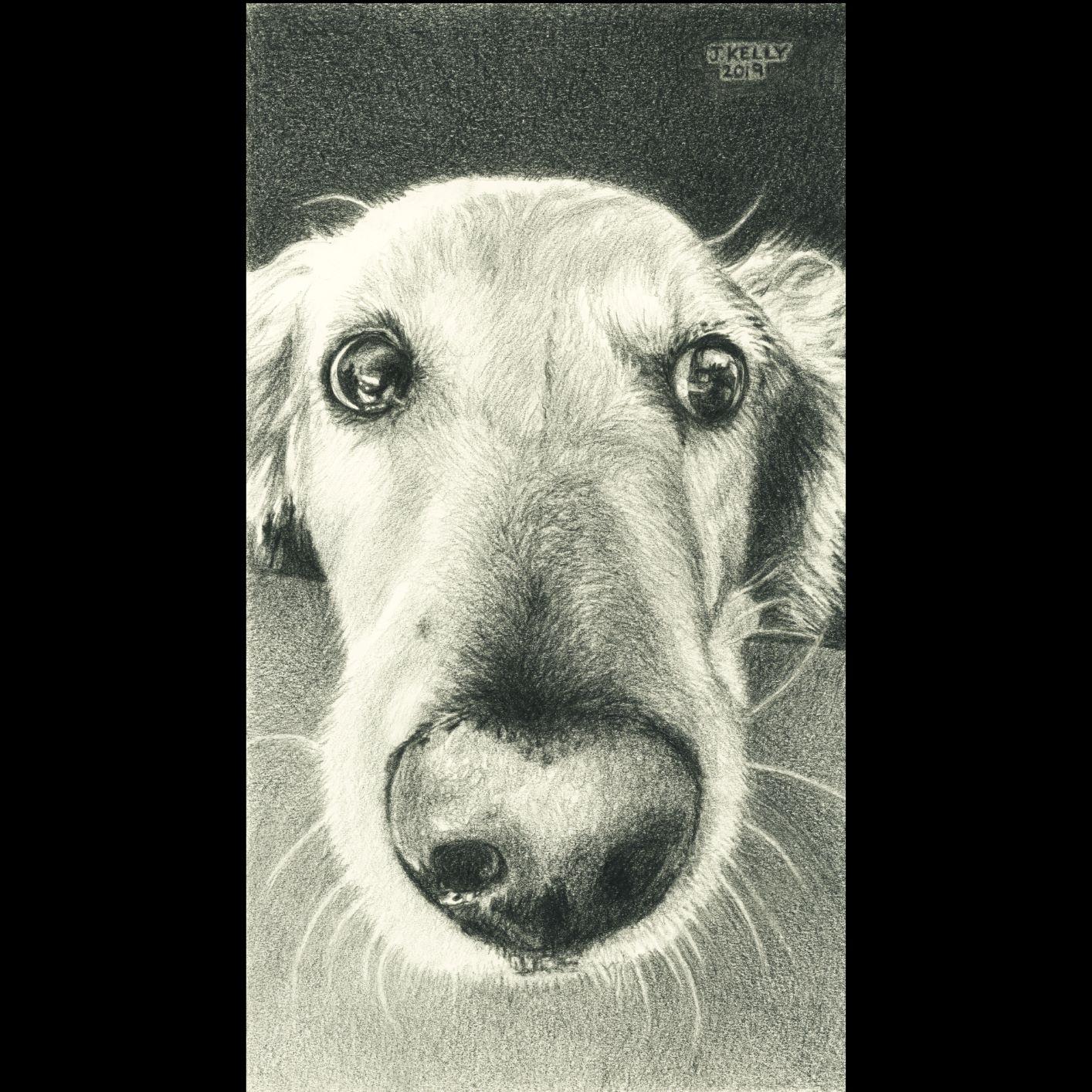 Jennifer Kelly, Nosy Dog